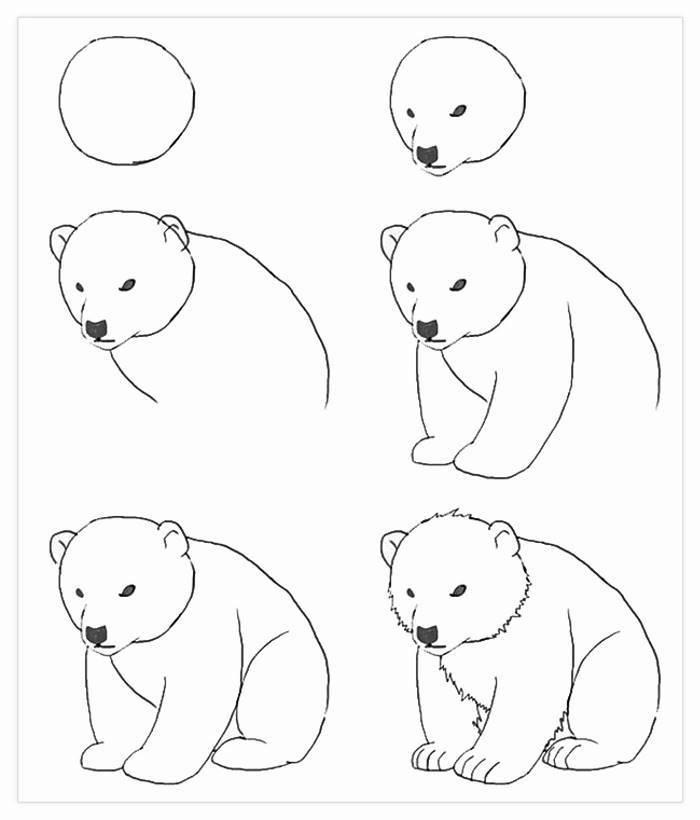 Ourse mecontente, photo de dessin facile, comment décalquer une image pas a pas dessin d'ourson