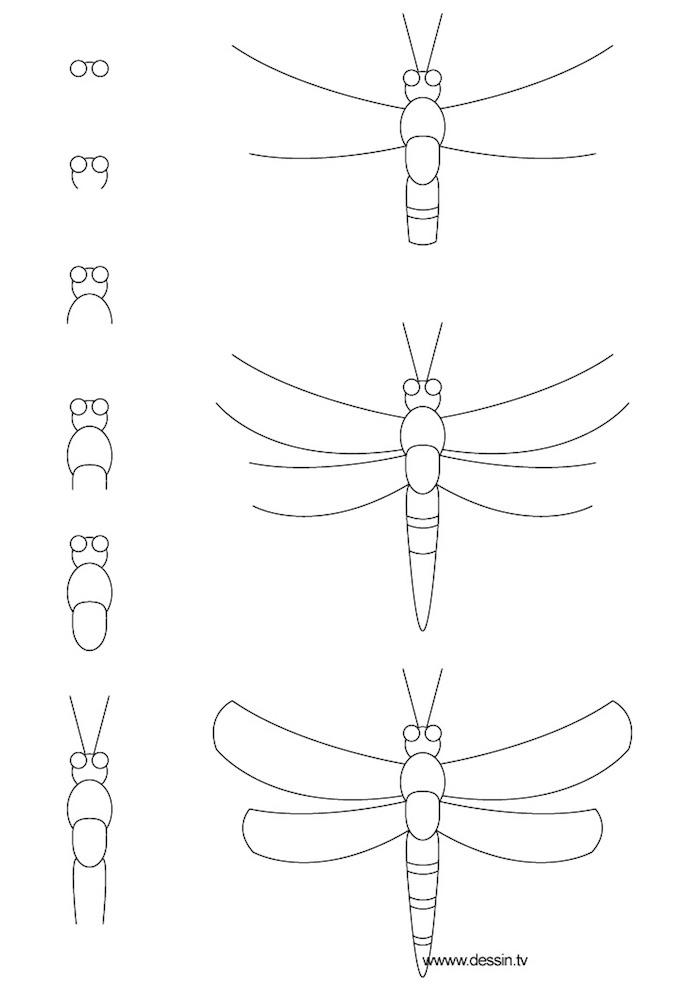 Dessin crayon sur papier étape par étape, insecte modèle à dessiner, image dessin facile et très beau