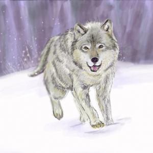 Astuces d'artiste pour apprendre à réaliser un dessin de loup soi-même