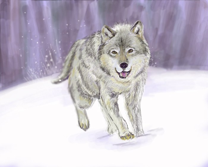 dessin de paysage polaire avec un loup polaire en train de courir, idée de dessin réaliste facile