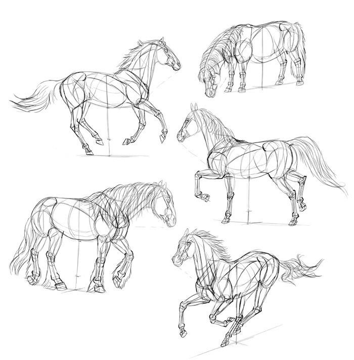 Cheval réaliste, comment capturer les actions, comment décalquer un dessin tuto de belle image cheval
