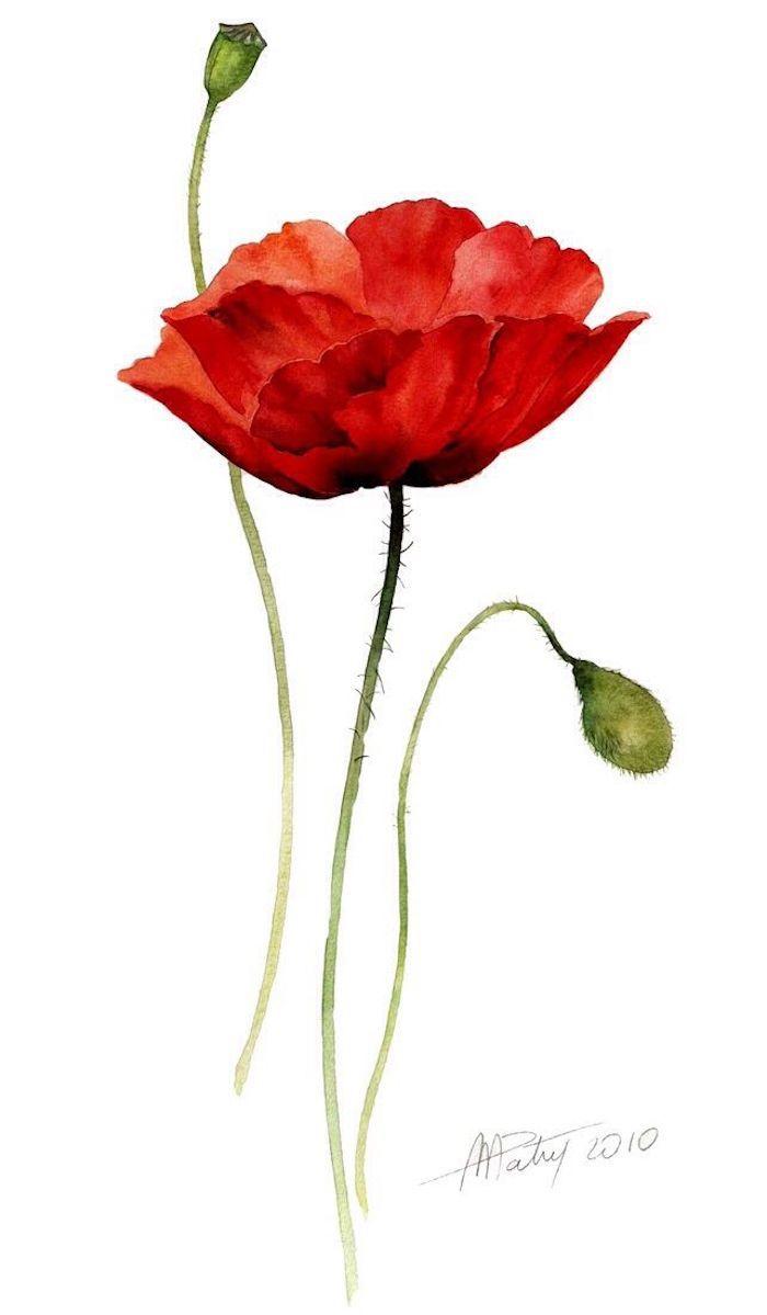 Pivot rouge champetre dessin de fleur rouge à l'aquarelle, été images et video apprendre a dessiner, cool idée de dessin