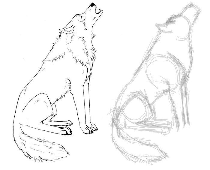 comment dessiner un loup dessin et ébauche croquis à coté, dessiner un loup hurlant à partir une silhouette de loup croquis