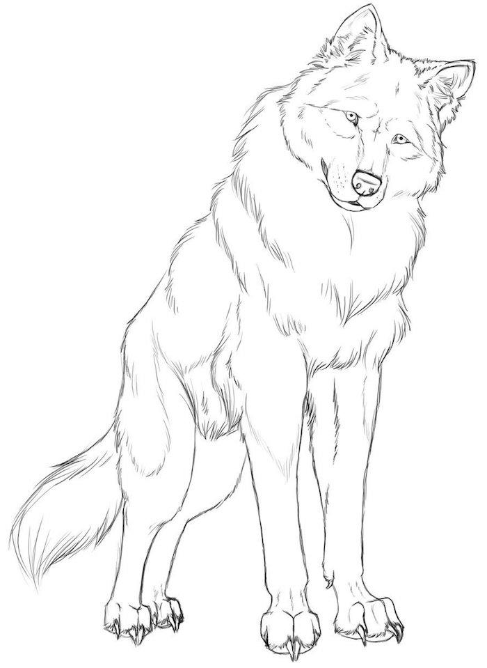 croquis de loup comme symbole de la fidélité et de l intelligence, animal curieux et social dessin