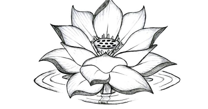 Comment dessiner une fleur de lotus dans l'eau, dessin réaliste noir et blanc, tatouage femme epaule, fleur tatouage original à grande signification