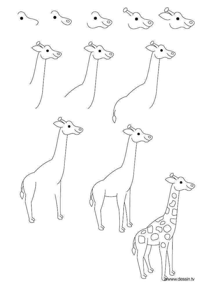 Girafe dessins a reproduire facilement, apprentissage dessin simple pour débutants
