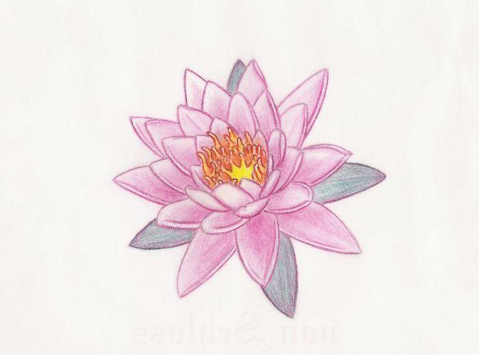 Rose lotus sacré asiatique fleur belle, exotique fleur de lotus tatouage, idée comment se tatouer