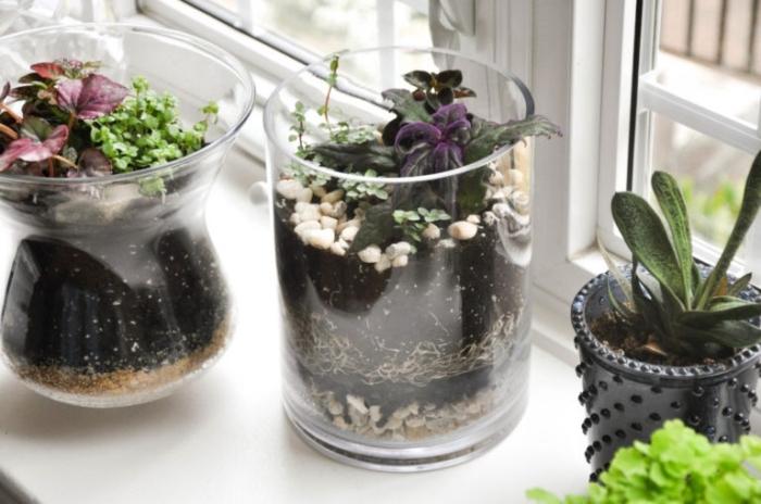 modèles de terrarium fait maison en verre, idée quelles plantes pour un terrarium ouvert, déco terrarium avec cailloux