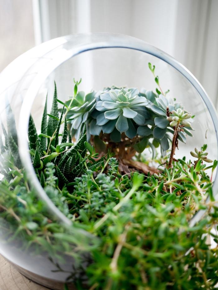 terrarium plante à faire soi-même, modèle de terrarium rond ouvert rempli de petites plantes vertes et terreau