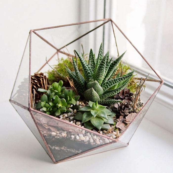 mini terrarium dans un récipient forme géométrique en verre, avec quoi remplir un terrarium fait maison de type ouvert