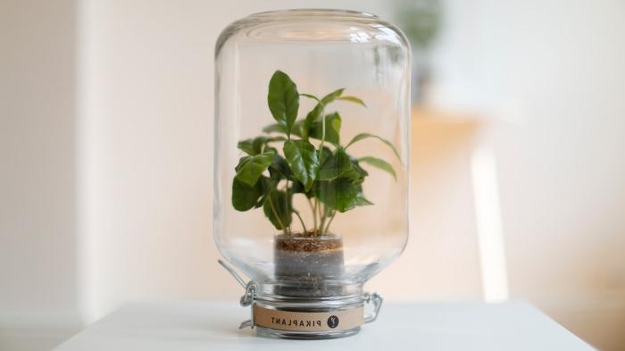 idée plante sous verre, projet jardinage à l'intérieur, modèle de mini jardin avec petites plantes dans un bocal verre