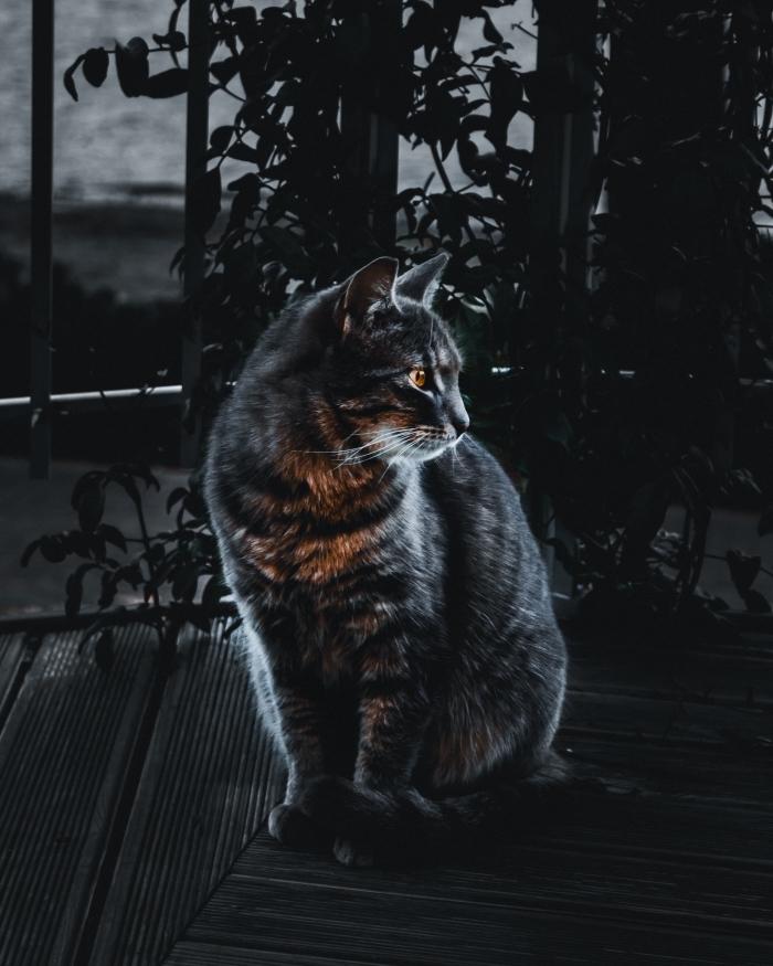fond d écran noir pour iphone, photographie chat noir aux yeux noisettes, wallpaper iphone avec symbole halloween