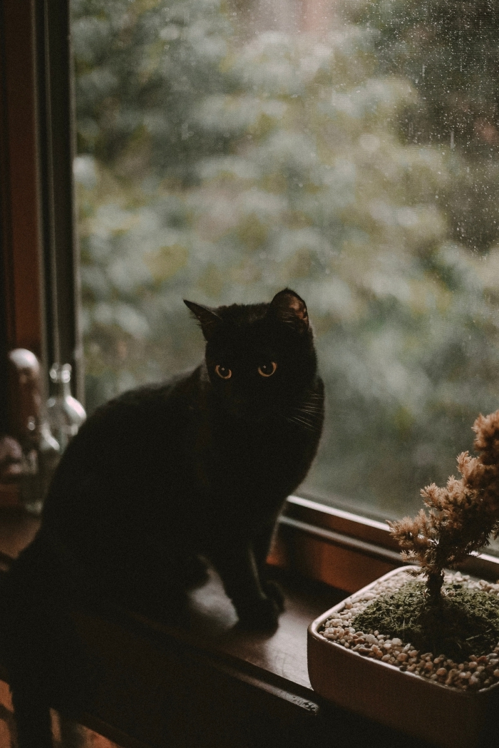 photo verrouillage écran iphone pour halloween 2019, idée photo de chat noir pour wallpaper portable halloween