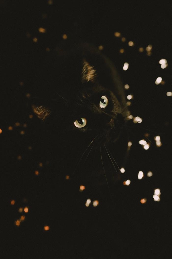fond écran ordinateur pour halloween 2019, photo de chat noir aux yeux blancs à fond noir pour écran verrouillage iPhone
