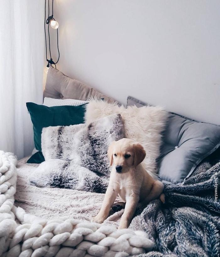 chien mignon sur un lit cocooning décoré de multitude de coussins décoratifs, plaid grosses mailles, guirlande lumineuse decorative, couverture grise moelleuse