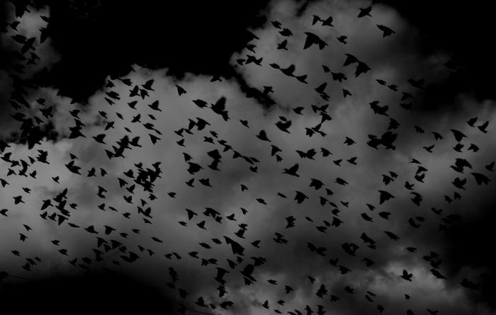 idée fond d écran horreur pour ordinateur, photographie blanc et noir du ciel nocturne, paysage vol d'oiseaux