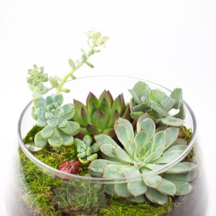 idée terrarium plante bocal, loisir créatif jardinage, quelles plantes pour un mini jardin intérieur dans bocal verre