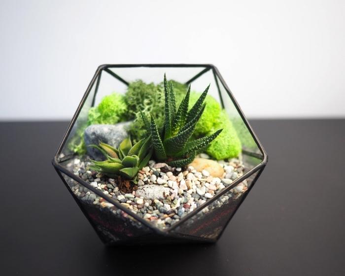 modèle de plante terrarium à faire soi-même, récipient en verre et métal peint en noir mat rempli de galets et aloés