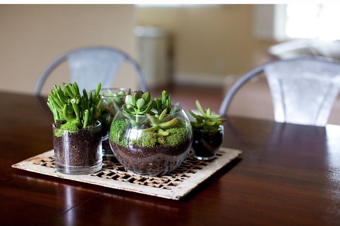 petite collection de mini terrarium en formes rondes, idée quelles plantes utiliser pour faire un terrarium ouvert