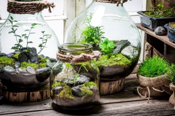 idée plante en bocal fermé, faire un mini jardin dans gros bocal en verre, comment décorer un terrarium avec mousse