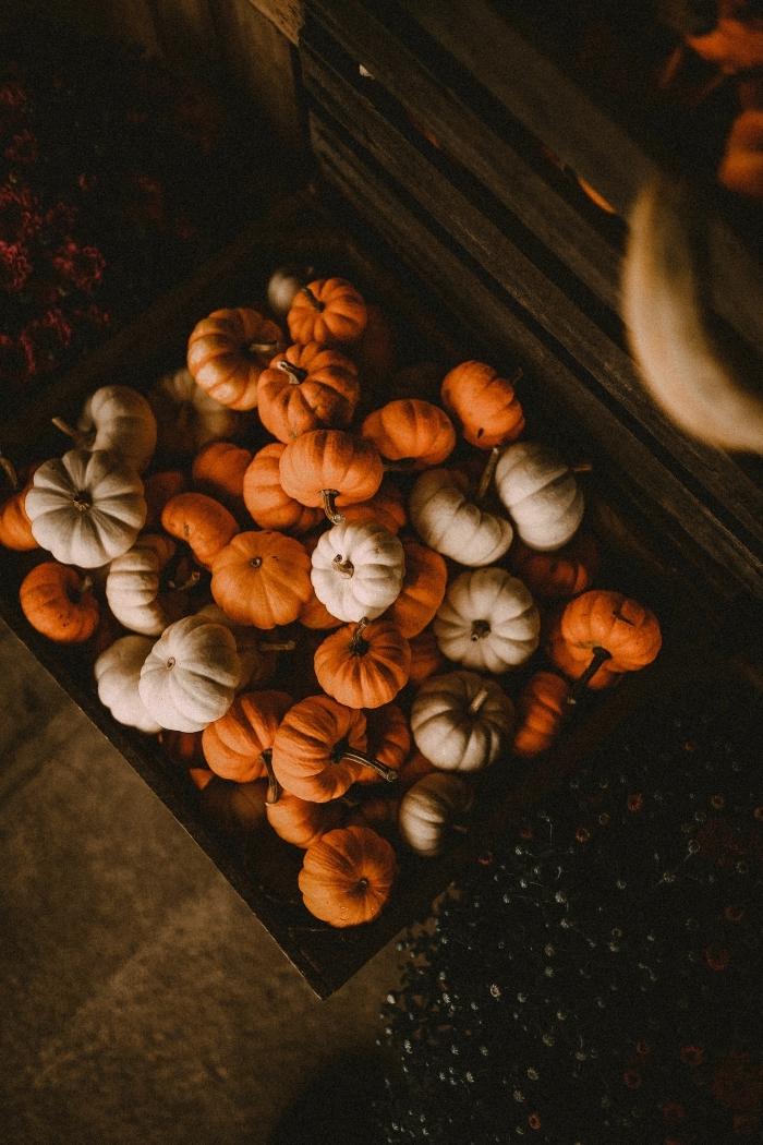 paysage d automne pour écran verrouillage portable, photo de petites citrouilles orange et blanches dans une cassette bois