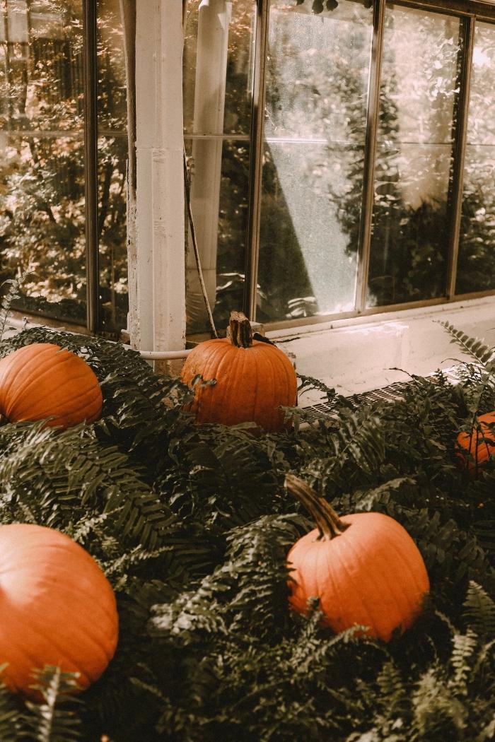 paysage d automne, idée décoration extérieure pour halloween avec citrouilles oranges, diy decor halloween