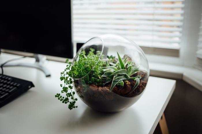 exemple comment aménager son bureau moderne, objet déco DIY, modèle de terrarium verre avec petites plantes