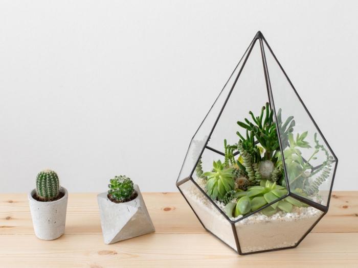 faire un mini terrarium dans un contenant verre en forme pyramide, modèle de pots en béton diy, déco avec plantes intérieures