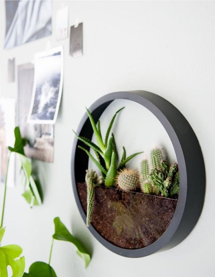 modèle de terrarium rond rempli de terreau et cactus, quelles plantes pour un terrarium ouvert, diy terrarium mural