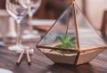 Faire un terrarium : guide complet pour créer son propre mini-jardin