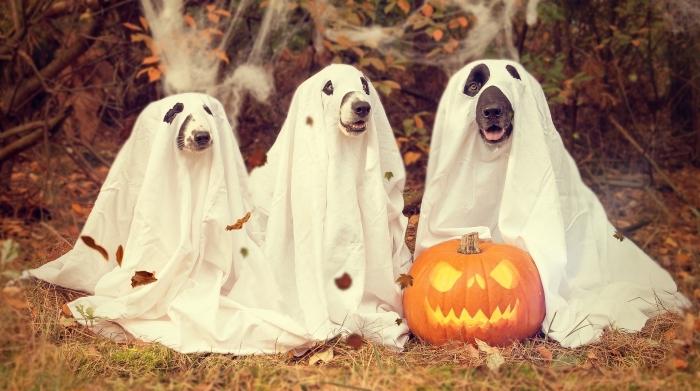 activité manuelle pour halloween, fabrication costumes animaux fantômes avec draps blancs pour la fête de Halloween