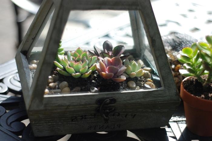 modèle de terrarium en bois facile à faire soi-même, mini-jardin avec petites plantes et cailloux dans lanterne bois