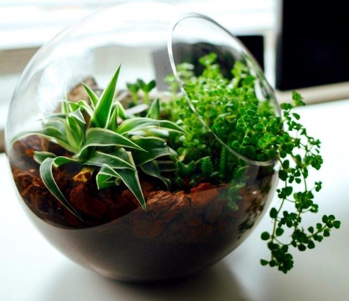 comment décorer son bureau à domicile, idée objet déco espace de travail à faire soi-même, idée terrarium plante bocal