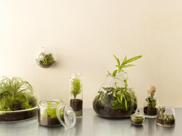 modèles de contenants en verre de formes et tailles variées pour créer un mini jardin intérieur, plantes vertes pour terrarium