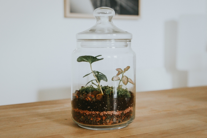 couches de remplissage terrarium à la maison, modèle de terrarium plante bocal ouvert avec petites plantes
