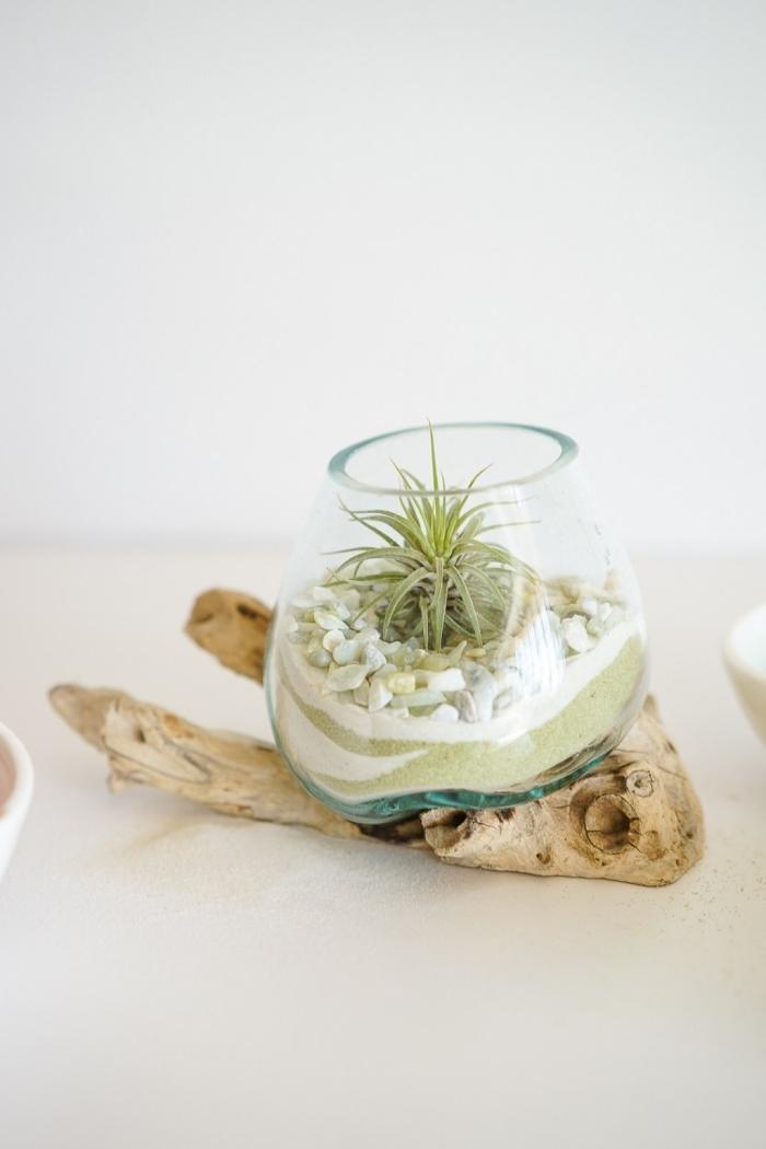 idée plante en bocal verre, modèle de mini terrarium avec sable et galets blancs, quelles plantes pour terrarium ouvert