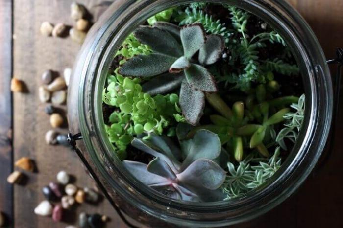 quelles plantes pour faire un terrarium bocal, photographie plante en bocal, modèle terrarium en bocal avec petites plantes