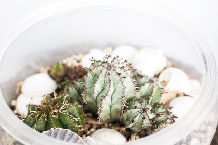 idée plante terrarium dans un contenant en plastique, avec quoi remplir un terrarium, modèle mini jardin avec coquillage et mini plantes