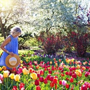 Quels bulbes à fleurs planter en automne