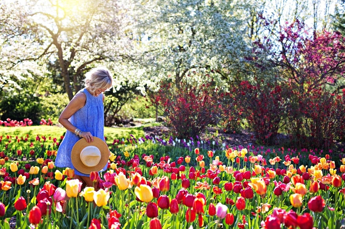 massif de tulipes aux couleurs variées, les variétés de bulbes de fleurs avec floraison printanière à planter dès l'été