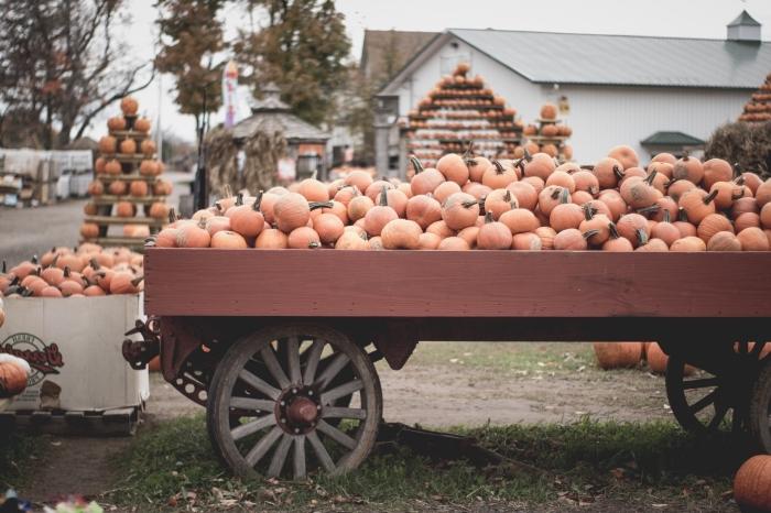 paysage d automne avec citrouilles, photographie chariot et citrouille comme wallpaper ordinateur pour Halloween