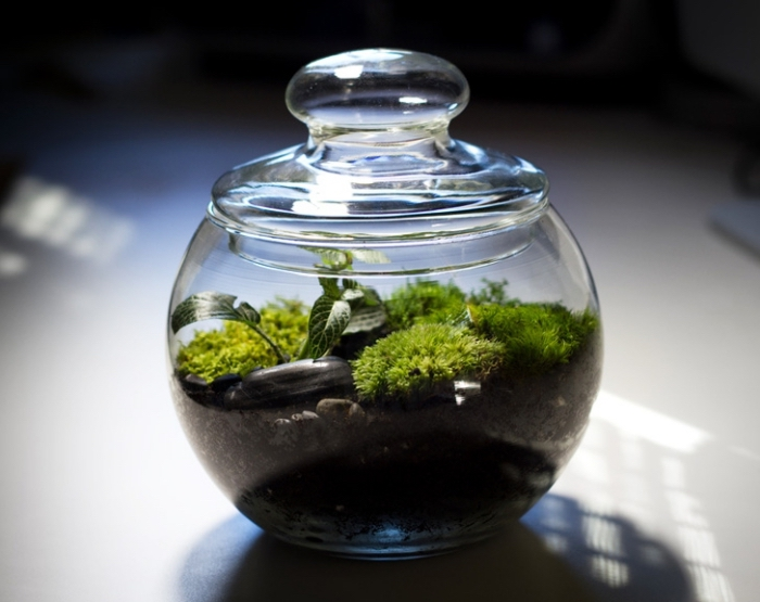 comment faire pousser plante sous cloche, idée terrarium bocal facile à faire, objet déco à faire soi-même avec mini plantes