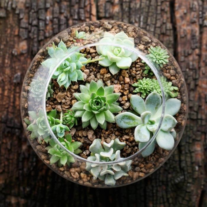 modèle de terrarium ouvert avec succulentes, bricolage terrarium plante dans contenant rond en verre rempli de galets