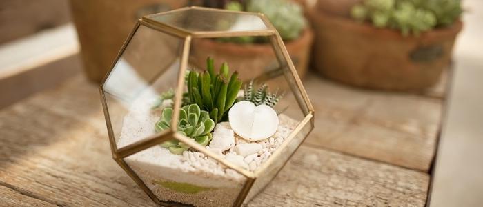 idée terrarium plante facile à réaliser, modèle de mini jardin avec plantes succulentes et galets, avec quoi remplir un terrarium