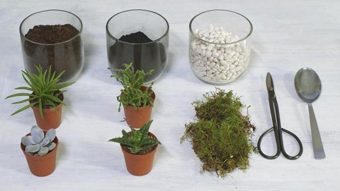 avec quoi remplir un terrarium fait maison, idées plantes à utiliser pour remplir un terrarium, sol et cailloux pour terrarium