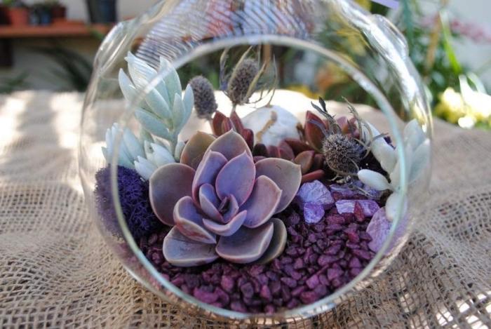 diy terrarium en verre avec petites plantes, quelles plantes pour créer un mini jardin dans bocal ouvert en verre
