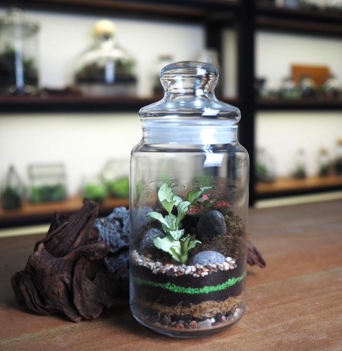 modèle de terrarium fermé à faire soi-même, idée plante en bocal fermé, diy mini jardin dans un bocal avec couvercle