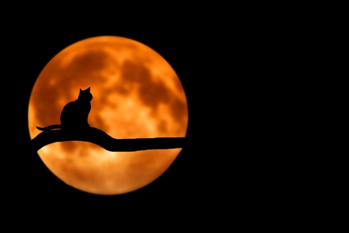 idée photo avec chat noir et pleine lune symboles de Halloween, wallpaper ordinateur avec image Halloween