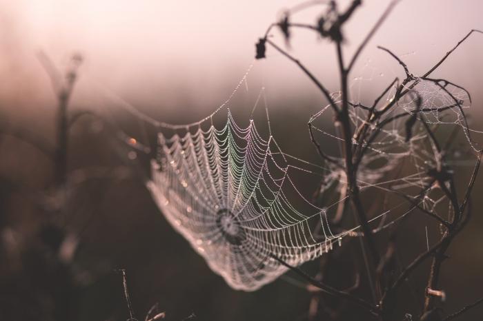 idée fond d écran automne avec paysage lever du soleil et toile d'araignée, wallpaper pc pour la fête de Halloween