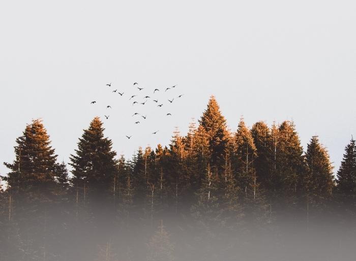 photographie nature d'automne, paysage d automne pour ordinateur, photo de vol d'oiseaux dans une forêt